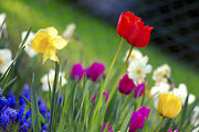 Colorful Spring garden flowers